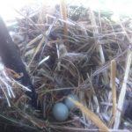 Y, protegido por la persiana y enredado en la reja, un nido... La vida sigue siempre dispuesta a sorprendernos.